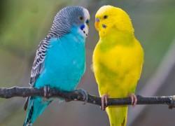 Помогите вылечить попугайчика