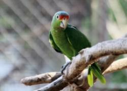 Берегите попугая