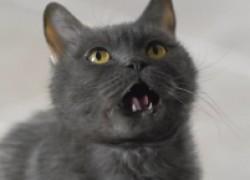 Мой кот все время голодный