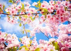 Почему осыпаются цветки?