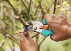 Зачем обрезают деревья
