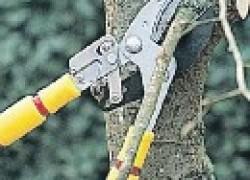 Ошибки при обрезке деревьев