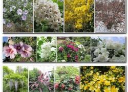 Увлекаюсь декоративными растениями много лет