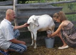 Разведение овец и коз в селе