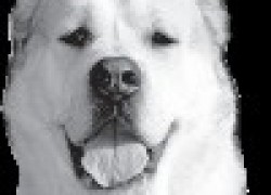 Алабай - собака из легенд