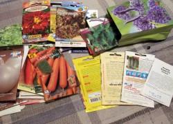 Сезон закончен – пора выбирать семена