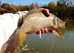 Летняя рыбалка: ловим карпа на мормышку