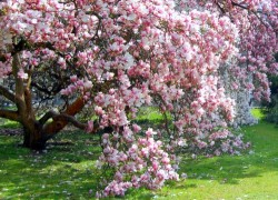 От цветения к урожаю