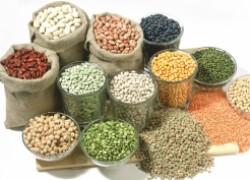 Как выбрать самые лучшие семена