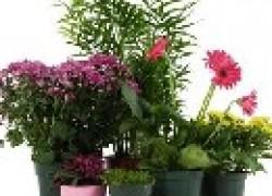 Очистить пространство от сигаретного дыма помогут растения