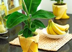 Хочешь банан