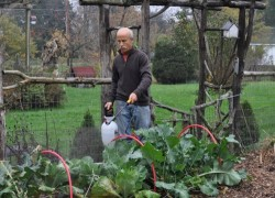 Вредители овощных культур и меры борьбы с ними
