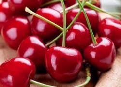 10 самых крупных сортов вишни