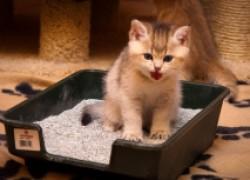 Как приучить котят к лотку