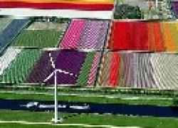 Тюльпановые «ковры» в Голландии