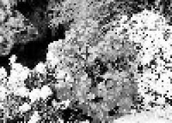 Растения для каменистых горок