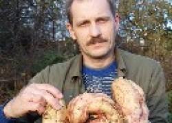 Батат как альтернатива картофелю