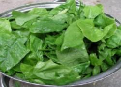 Зачем выращивают шпинат