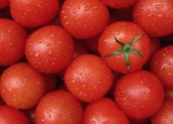 Сколько можно заработать на помидорах