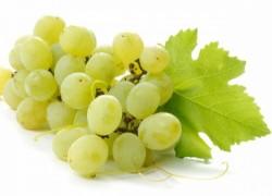Посадка винограда в крайние сроки