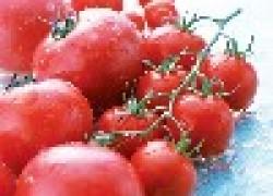 Почему трещат помидоры