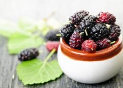 Почему не плодоносит шелковица