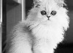 Болят десны у кота