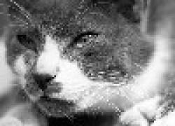 Почему плачет кот