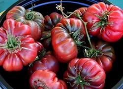 Ребристые сорта помидоров