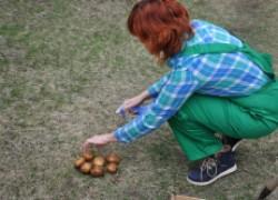Израильская картошка оказалась перекормленной нитратами. ВИДЕО
