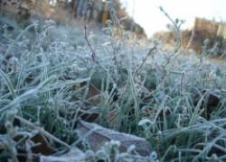 Спасаем кусты от весенних заморозков в феврале