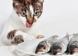 О кошачьих кормах и о рыбе