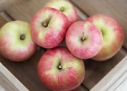 Чтобы яблоки не болели в погребе