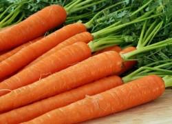 Верхушка моркови зеленеет