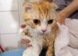 Можно ли купать беременную кошку