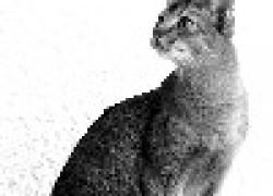Абиссинска - рисованная кошка