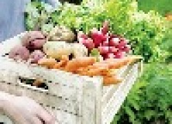 Нетрадиционные способы повышения урожая