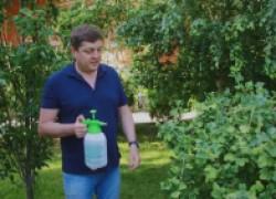 Адская смесь против болезней и вредителей в саду и огороде. ВИДЕО