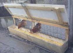Элементарная бункерная кормушка для перепелов и цыплят из... Пластиковой бутылки