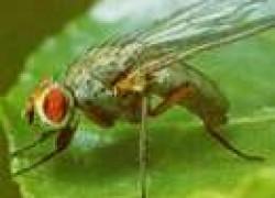 Нелюбимые растения вредных насекомых