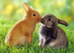 Два кролика в одной клетке