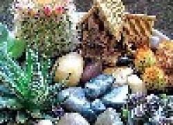 Мини-сад - как сделать композицию из кактусов