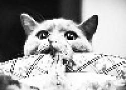 Рекомендации по кормлению кошек