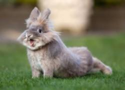 Теплые стельки из кролика