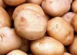 Генномодифицированые сорта картофеля