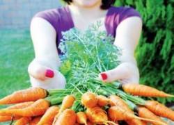 Морковь на месяц раньше