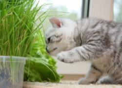 10 опасных растений для домашних животных