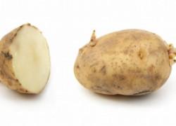 Используем картофель для уничтожения вредителей