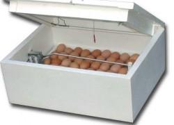 Как выращивать цыплят в инкубаторе