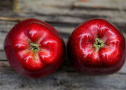 Как бороться с вредителями и болезнями яблони. ВИДЕО